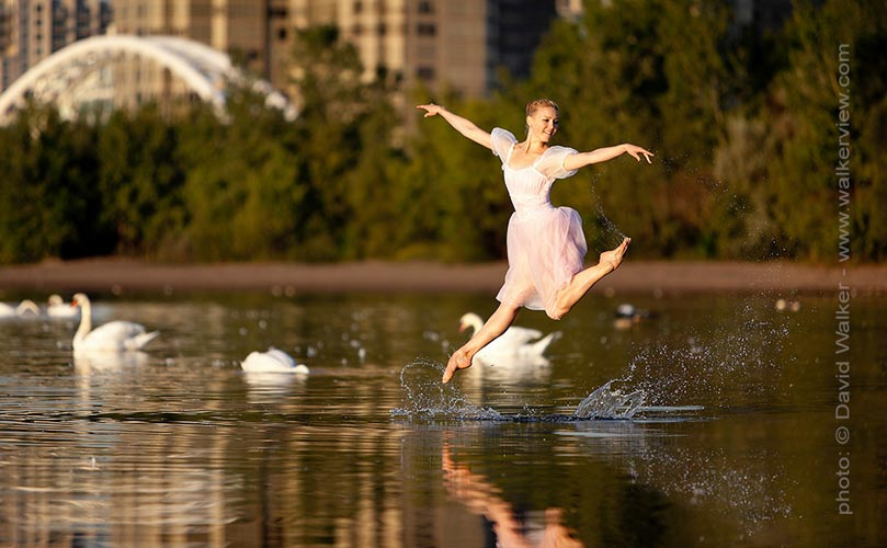 Tonya Milne jumping from the lake with swans by David Walker dance photographer.